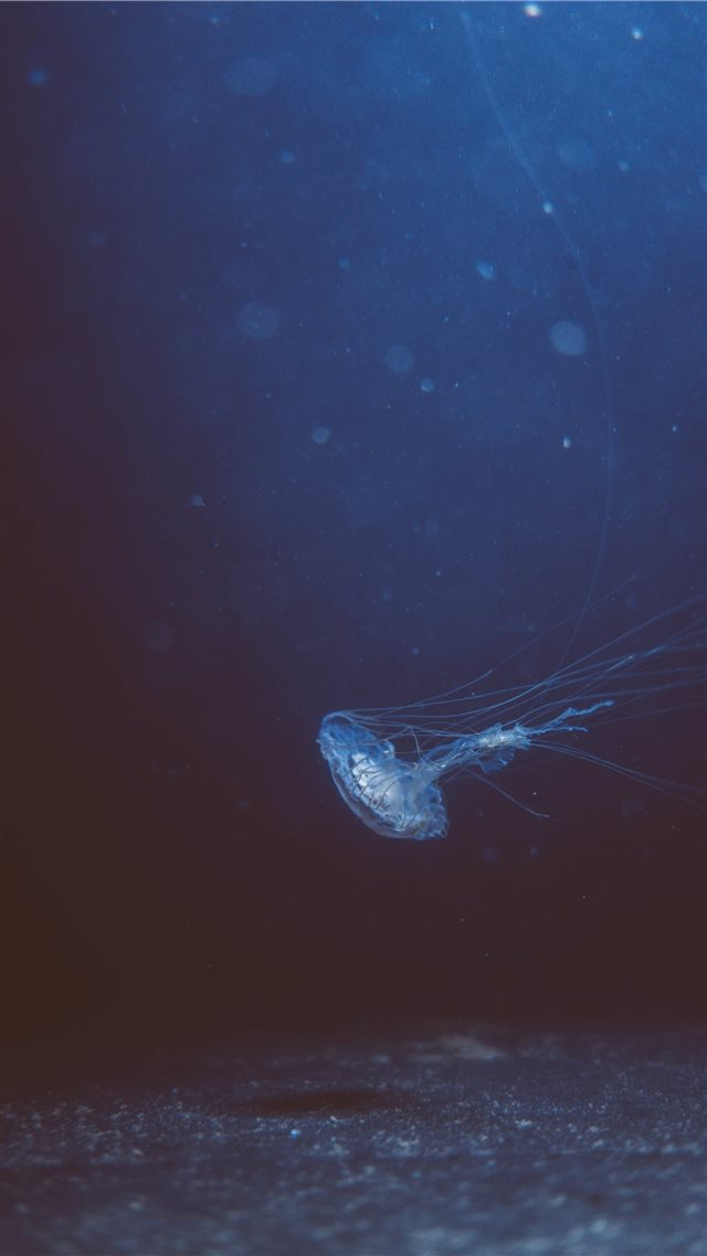 Jellyfish iPhone SE wallpaper