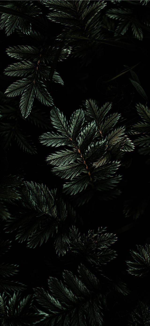 Moody Tones iPhone X wallpaper