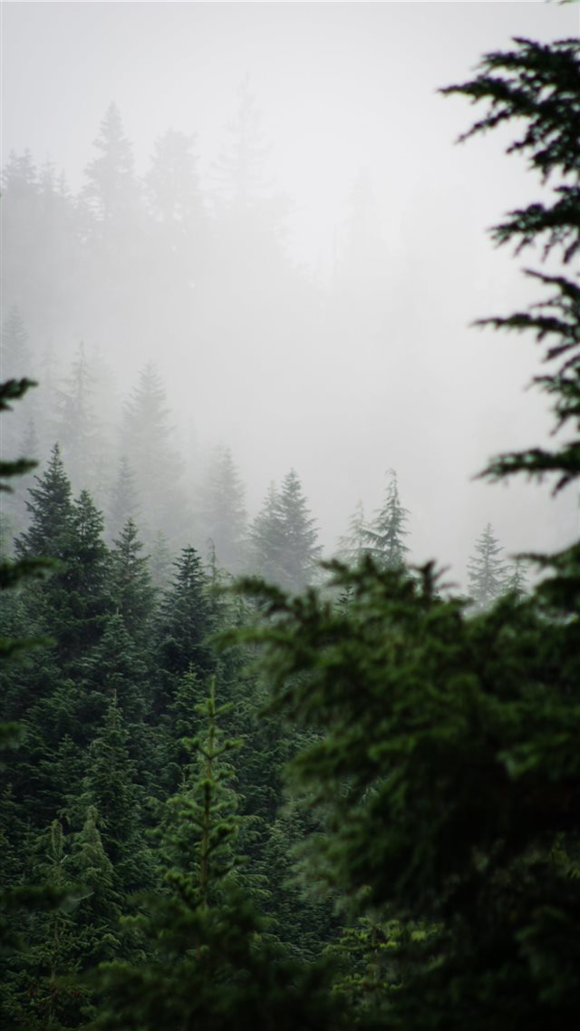 Alpine Lakes Wilderness iPhone 8 wallpaper