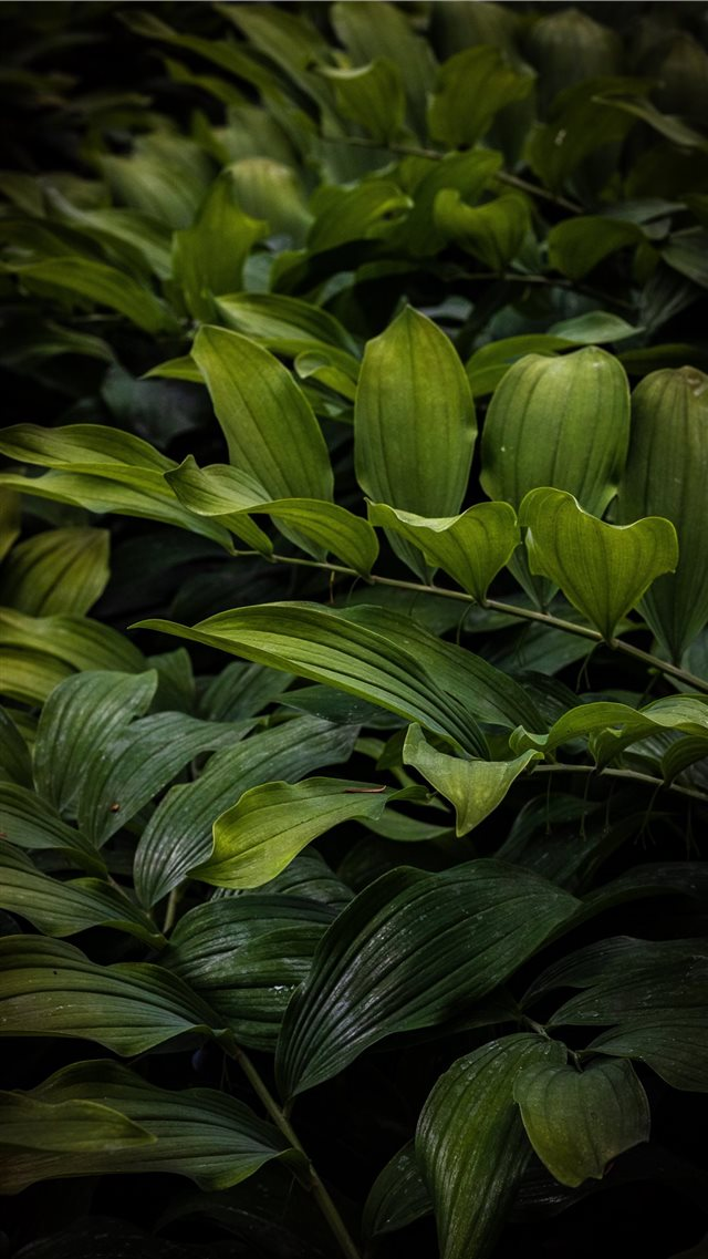 Beautiful ferns overlap one another iPhone 8 wallpaper