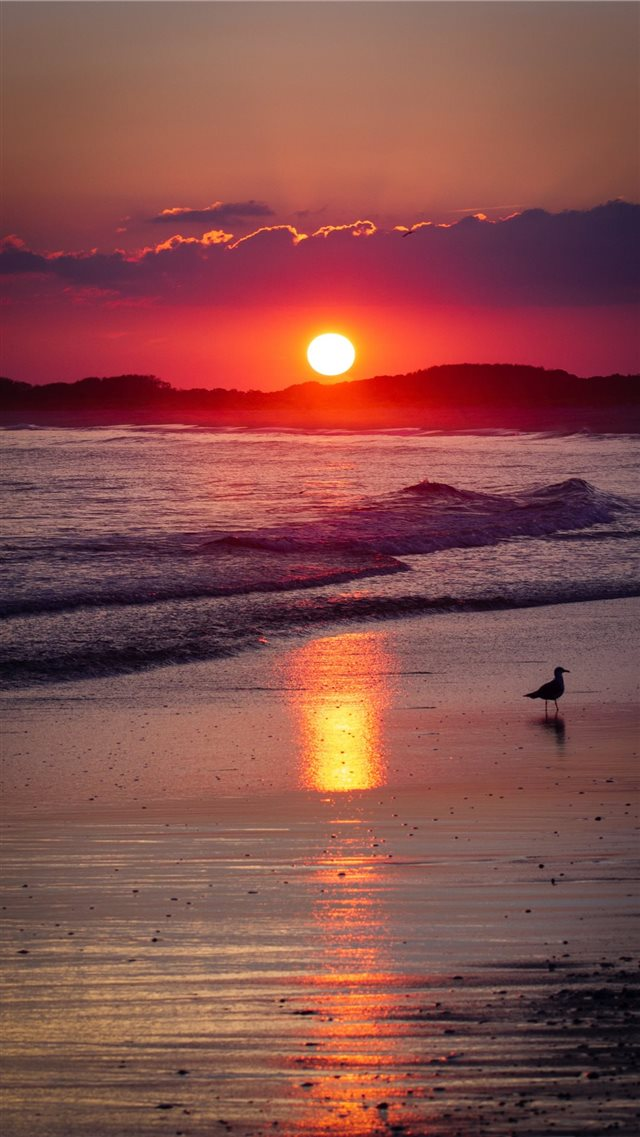Cape May  NJ iPhone 8 wallpaper
