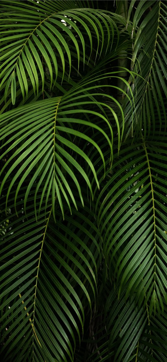By Hector Falcon Fairchild Tropical Botanic Garden iPhone X wallpaper