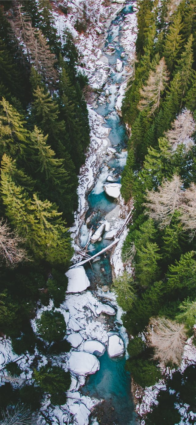 aerial photography of body of water between pine t... iPhone 11 wallpaper