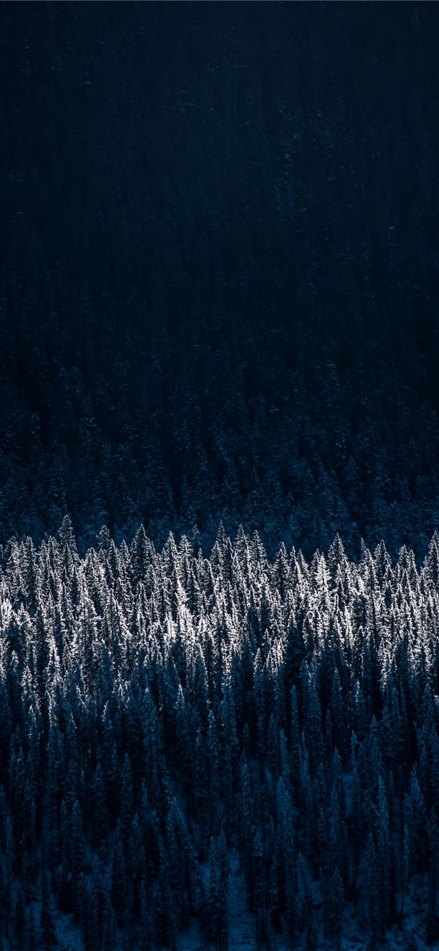 aerial photography of snow capped trees iPhone 11 wallpaper