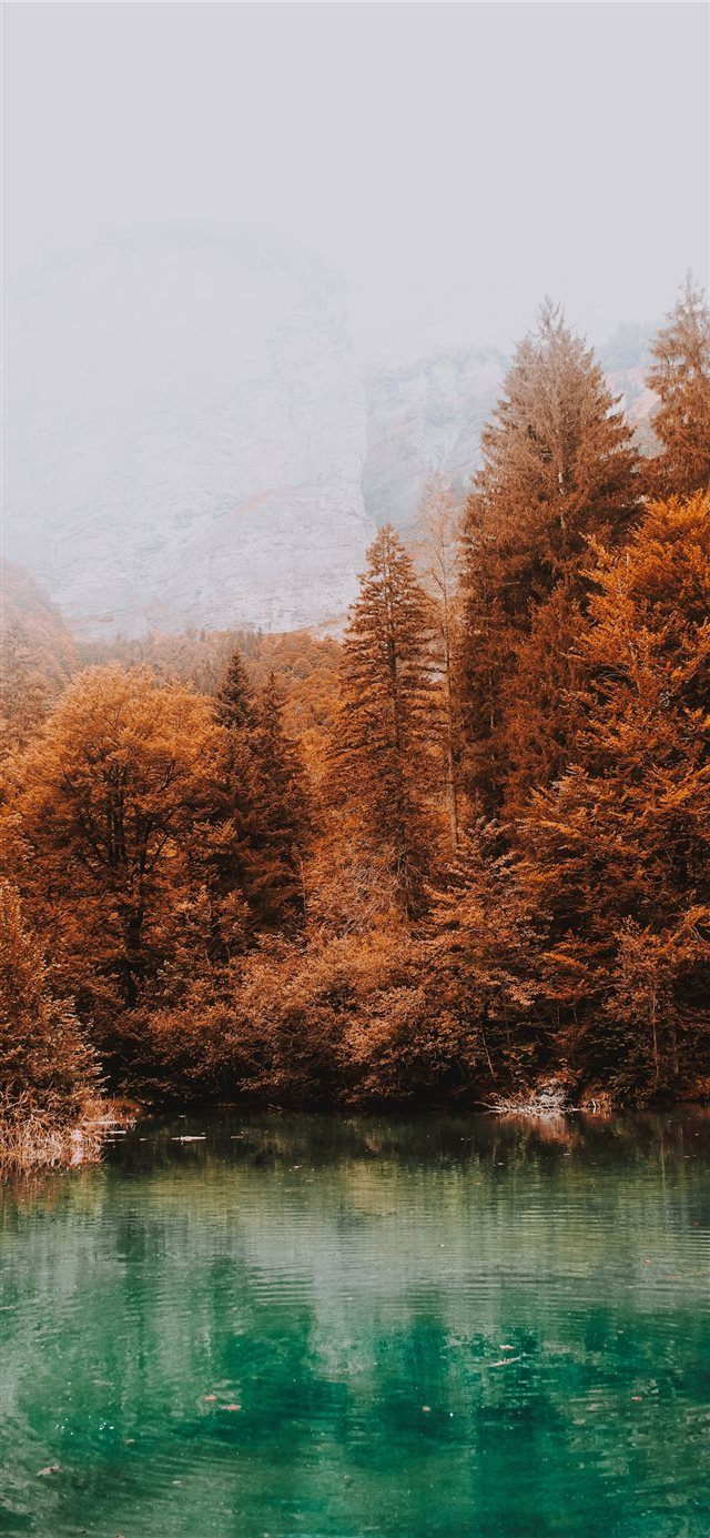 blue lake surrounded by brown leafed trees iPhone 11 wallpaper