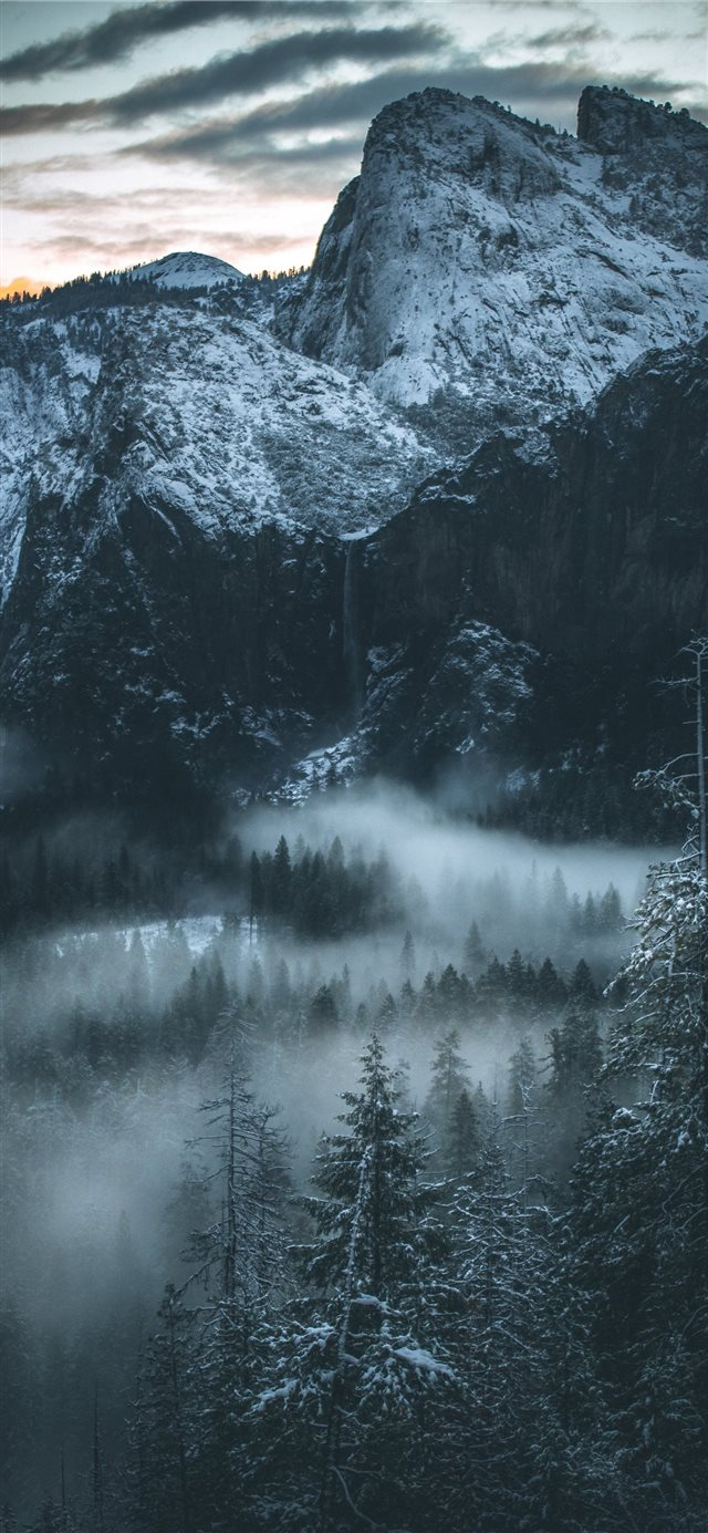 fog covered forest iPhone X wallpaper