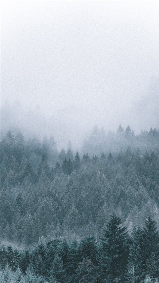 foggy icy green pine trees scenery iPhone SE wallpaper