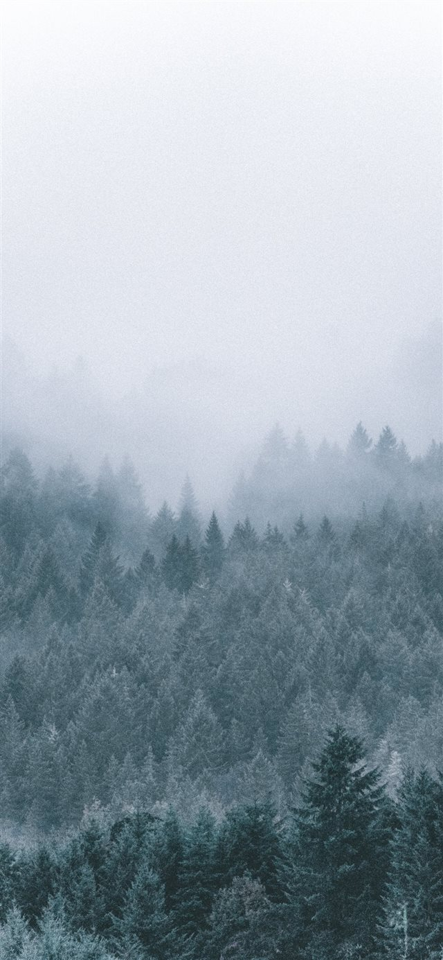 foggy icy green pine trees scenery iPhone X wallpaper