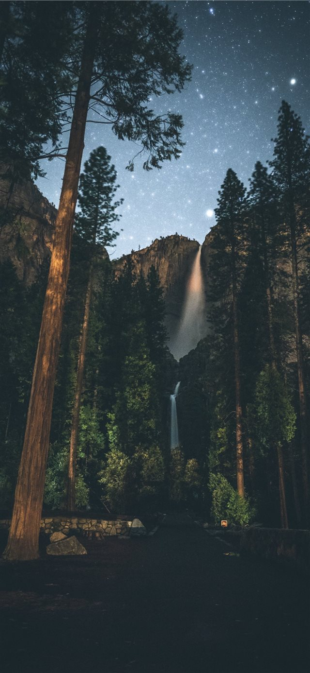 forest painting iPhone X wallpaper