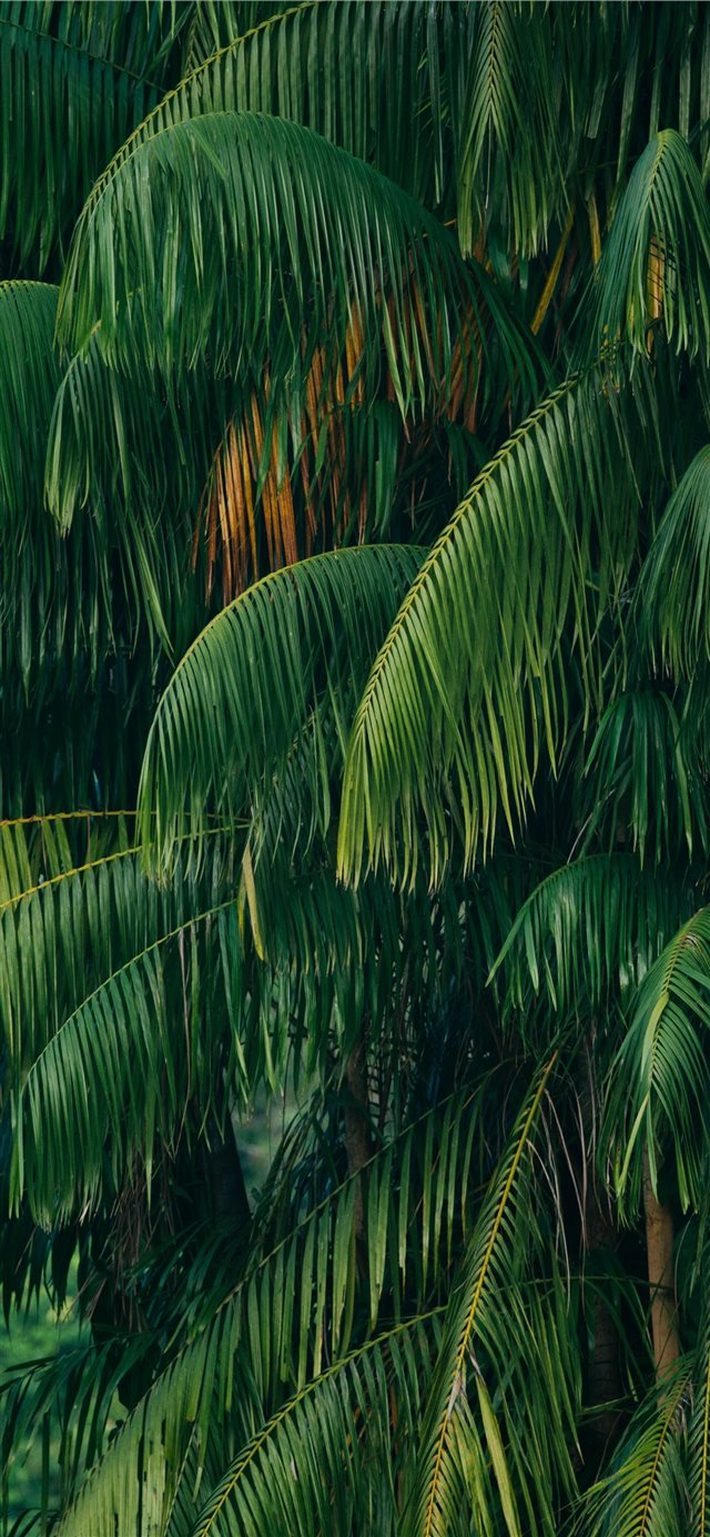 green coconut tree iPhone X wallpaper