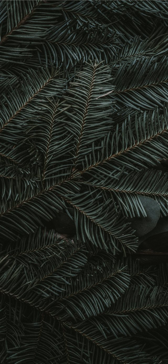 green pine tree leaves iPhone 11 wallpaper