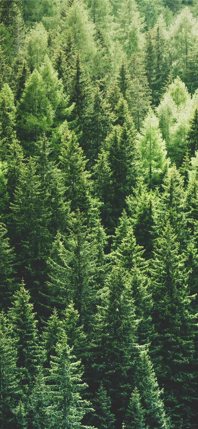 green pine trees in forrest iPhone 11 wallpaper