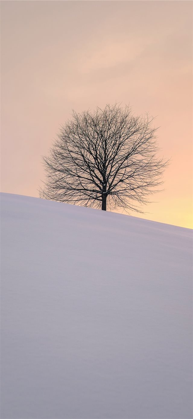 leafless tree on the hill iPhone 11 wallpaper
