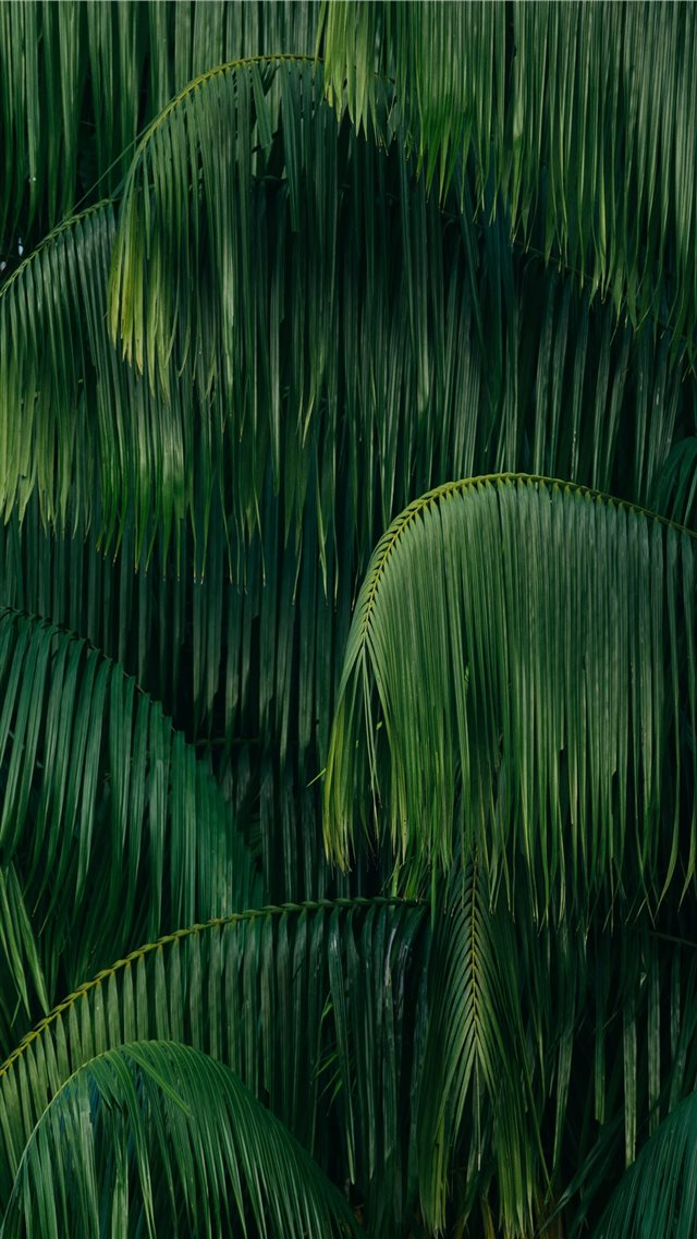 palm leaves iPhone 8 wallpaper