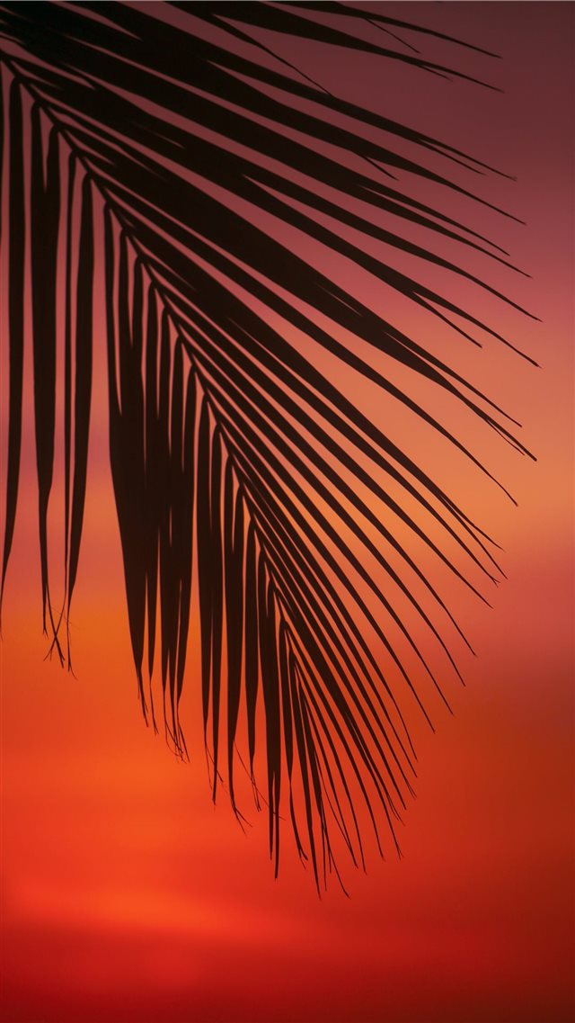 palm tree leaf iPhone 8 wallpaper