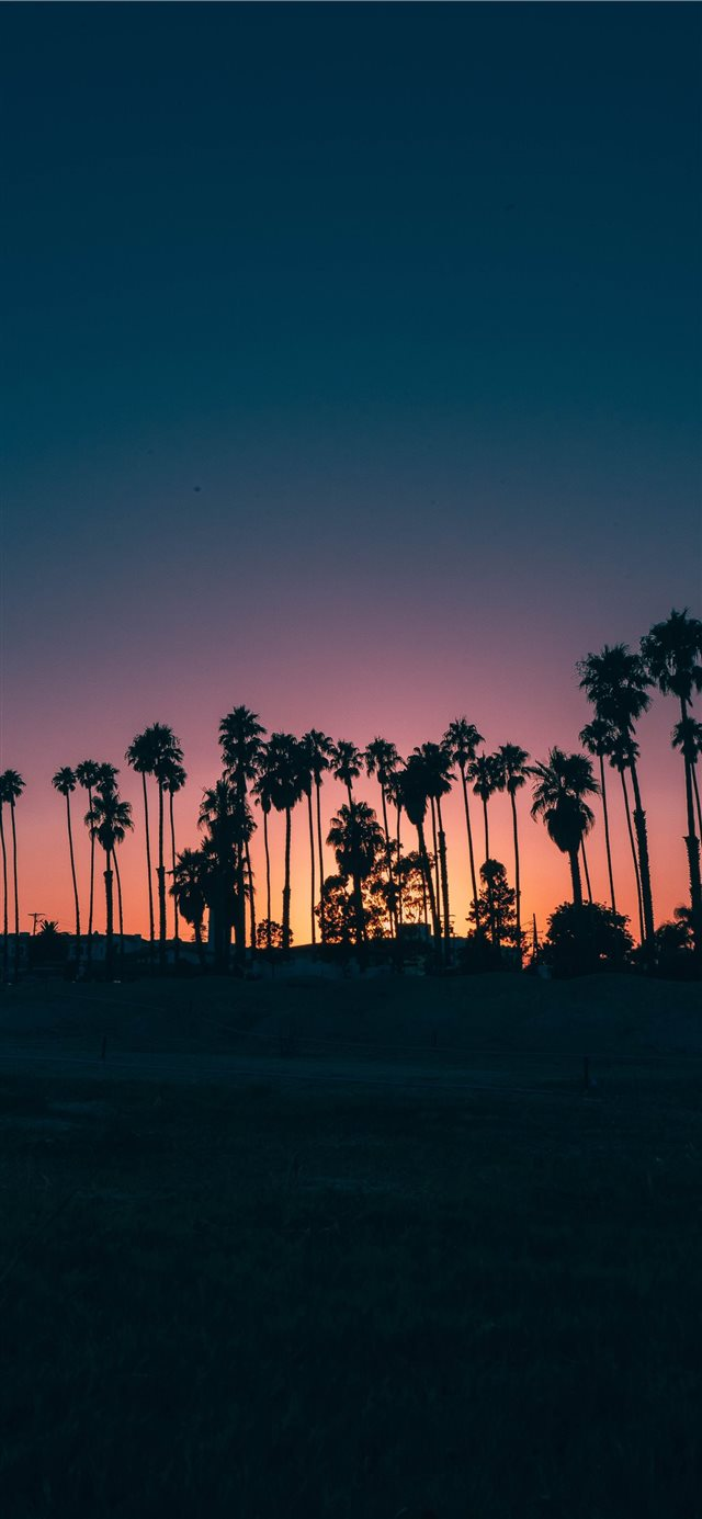 palm trees during sunset iPhone X wallpaper