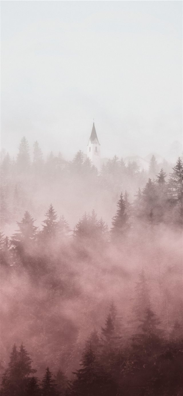 pine trees covered in fogs iPhone X wallpaper