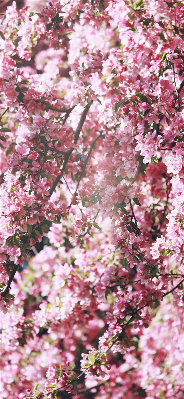 pink flowers iPhone X wallpaper