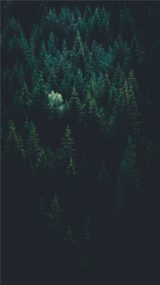 scenery of forest trees iPhone SE wallpaper