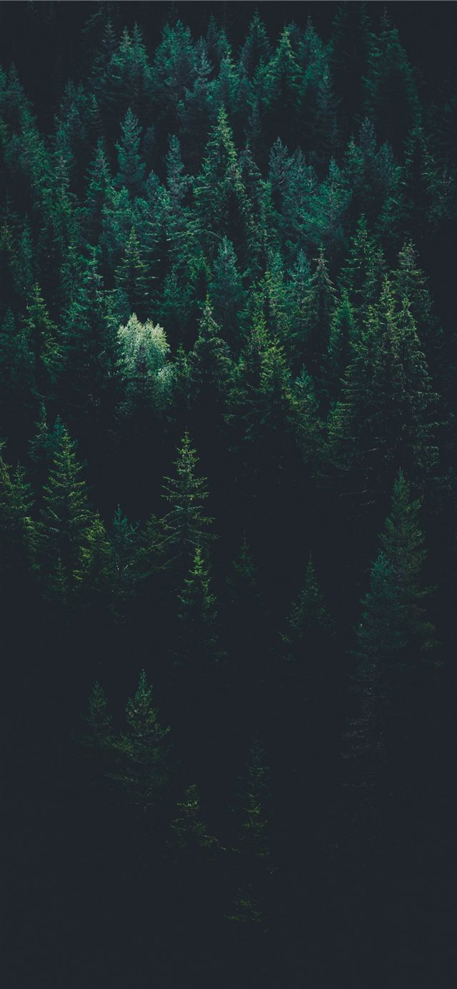 scenery of forest trees iPhone X wallpaper