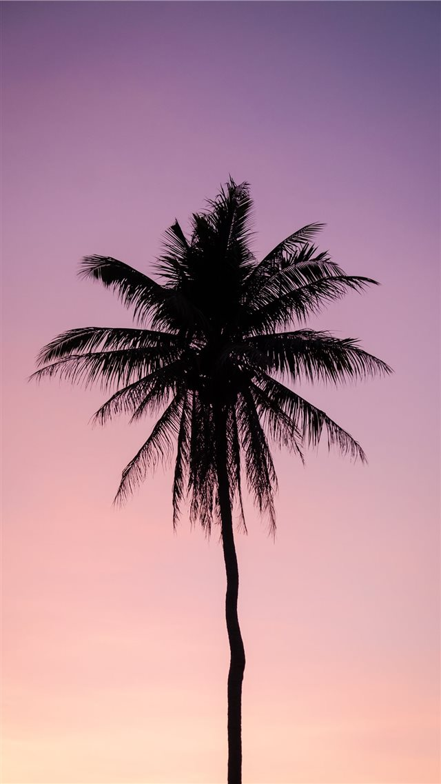 silhouette of palm tree iPhone 8 wallpaper