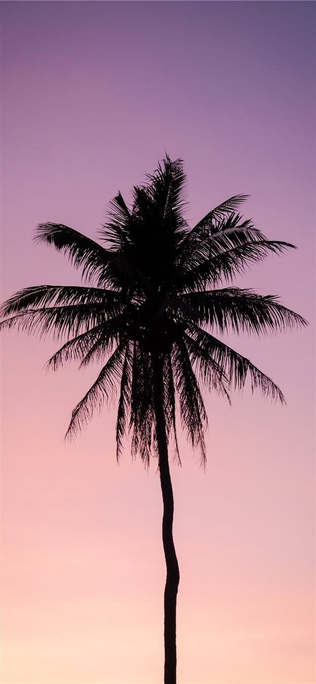 silhouette of palm tree iPhone X wallpaper