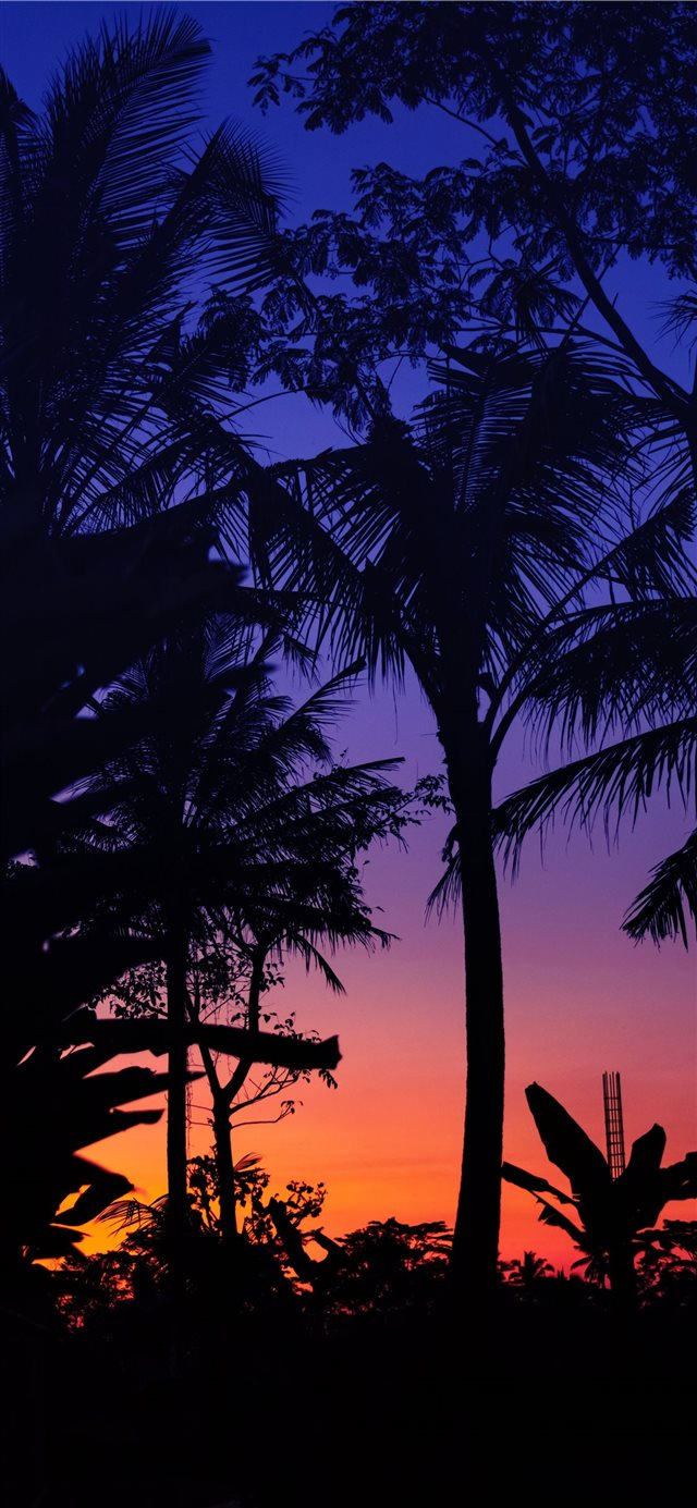 silhouette of palm trees during golden hour iPhone 11 wallpaper
