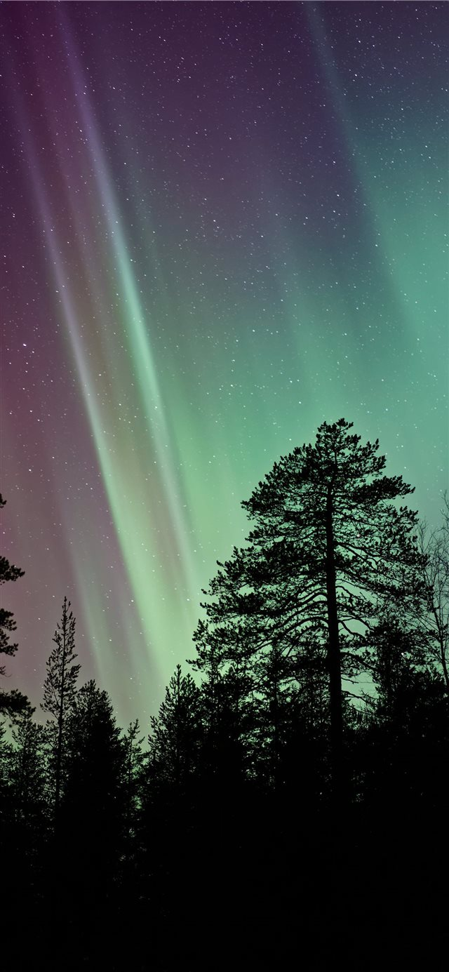 silhouette photo of aurora borealis iPhone X wallpaper