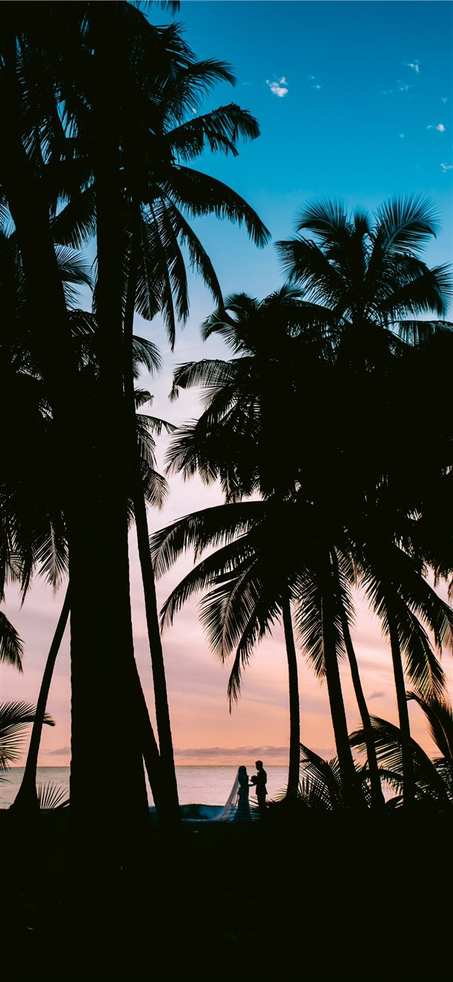 silhouette photography of coconut palm trees iPhone 11 wallpaper