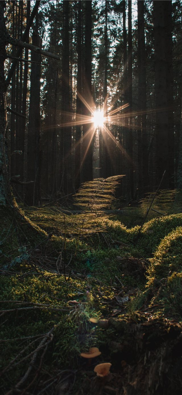 Turns out this light corridor in the forest was hi... iPhone 11 wallpaper