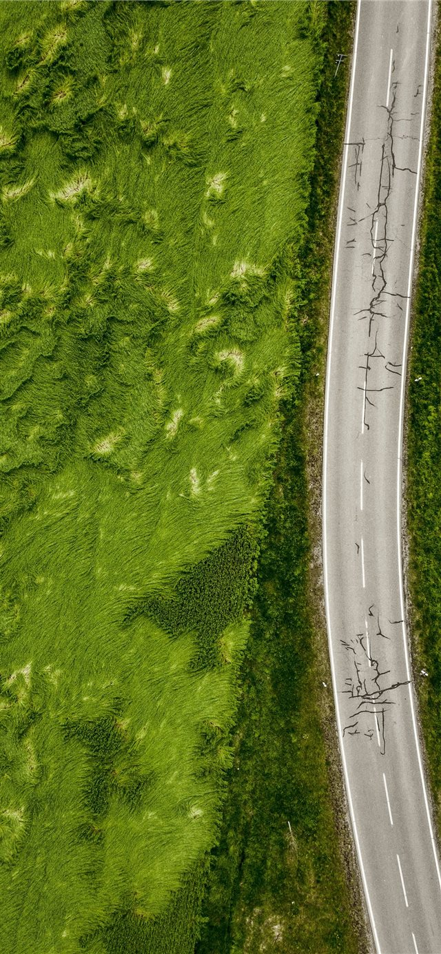 aerial photo of empty concrete road between plants iPhone 11 wallpaper
