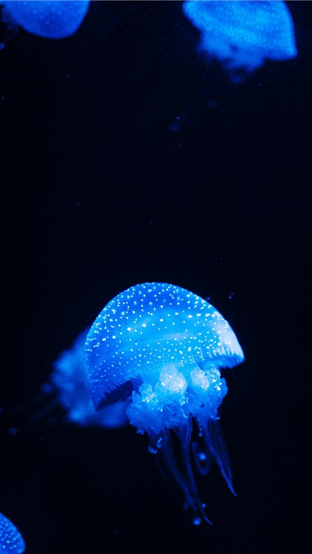blue jellyfish lot close up photography iPhone 8 wallpaper