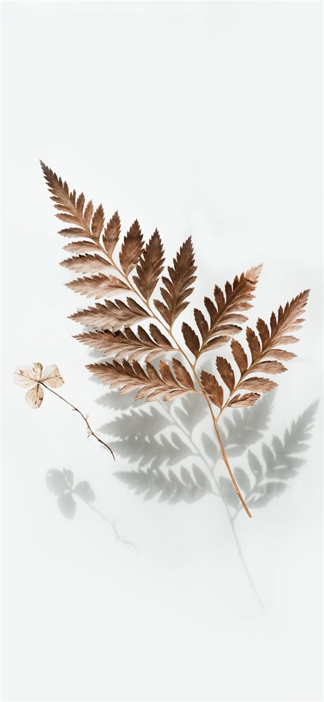 brown leaf iPhone X wallpaper