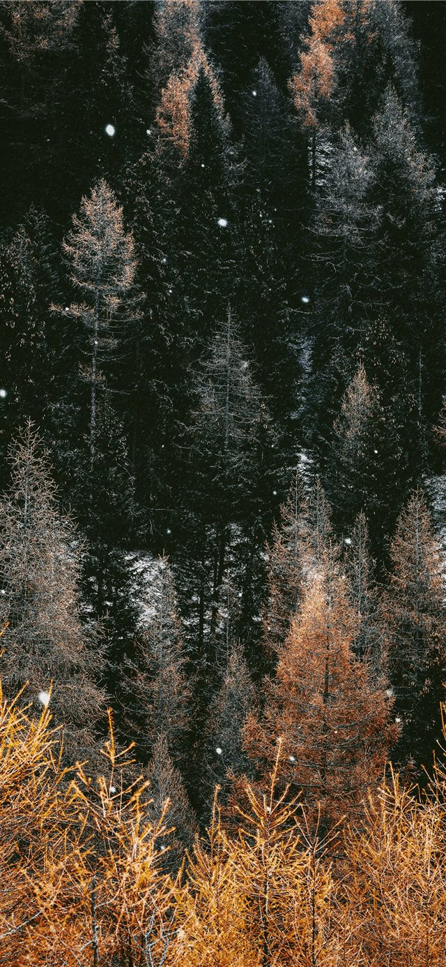 brown trees during daytime iPhone X wallpaper