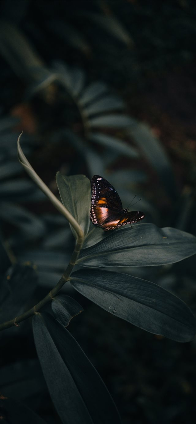 butterfly perching on leaves iPhone X wallpaper