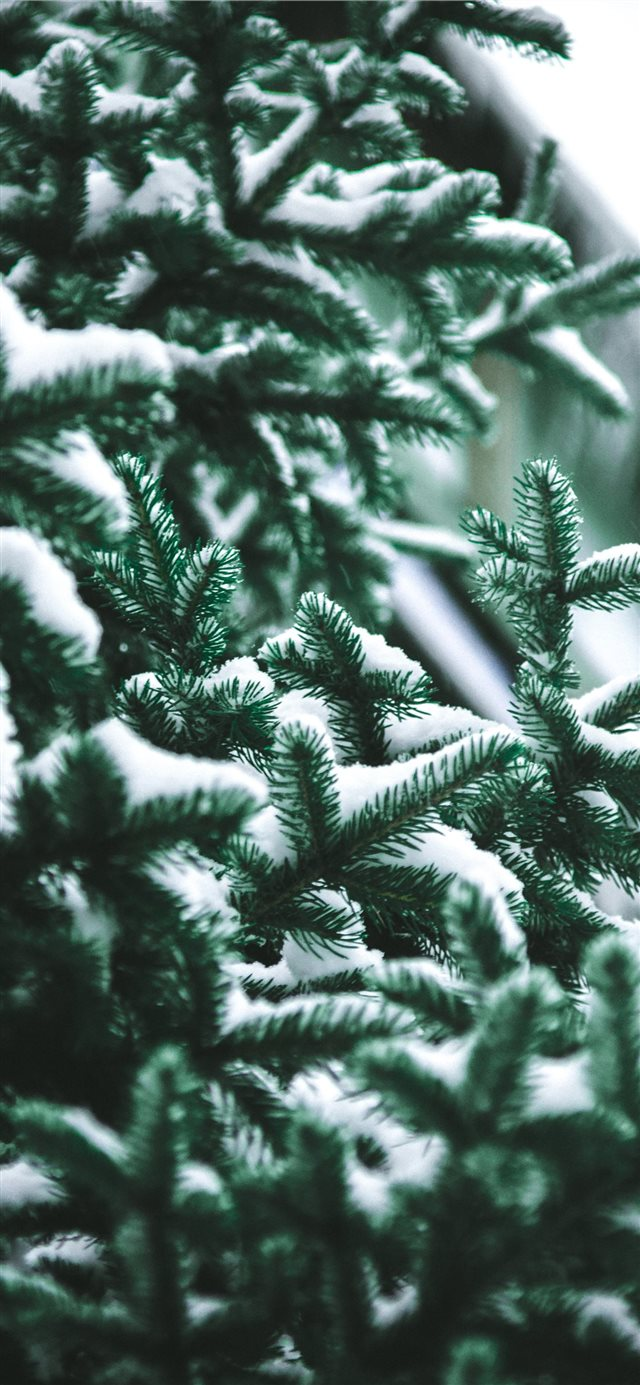 close up photography of snow covered green pine tr... iPhone X wallpaper