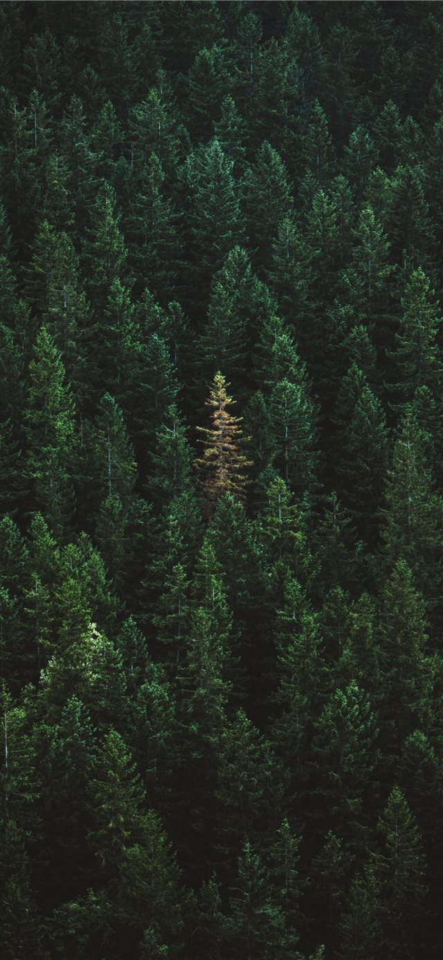 green treers iPhone 11 wallpaper