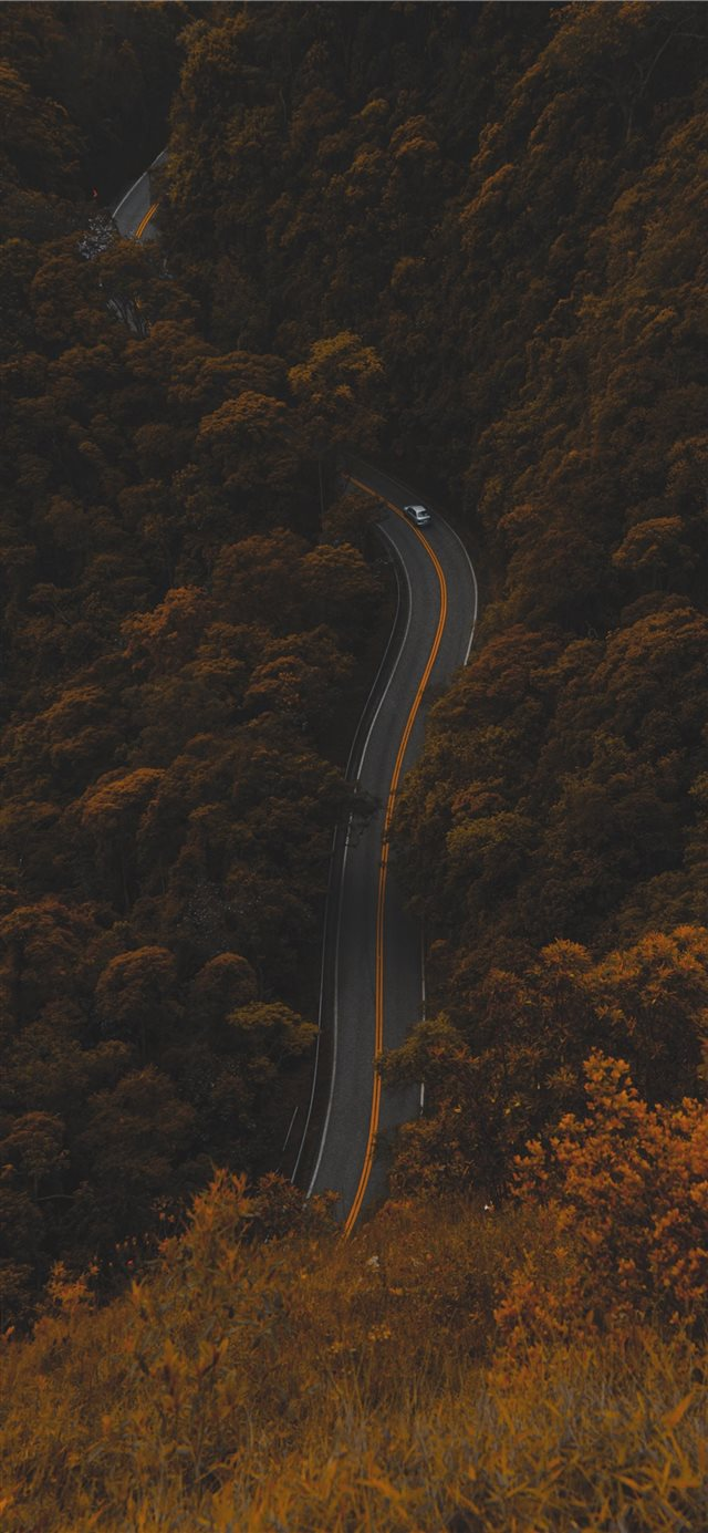 high angle photography of road between trees iPhone X wallpaper