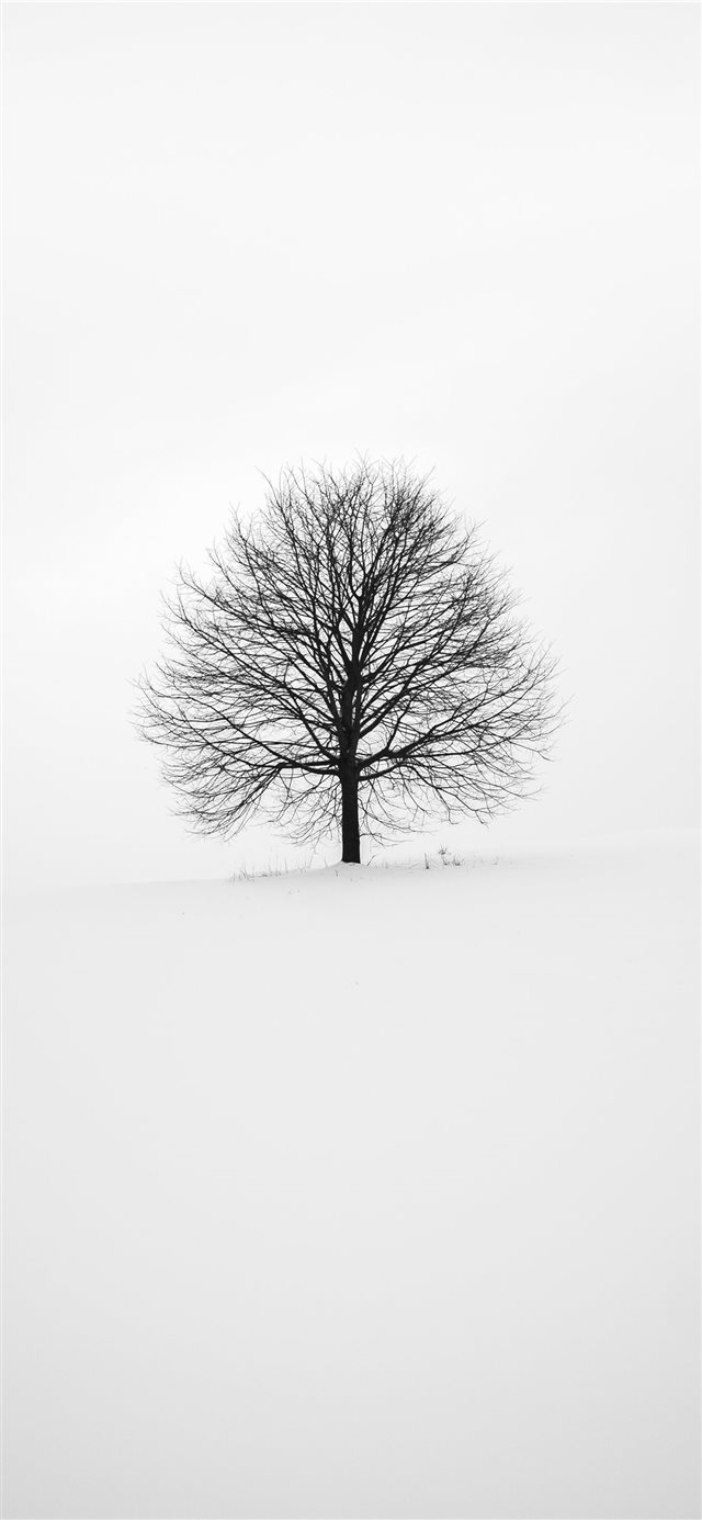 photography of tree iPhone 11 wallpaper