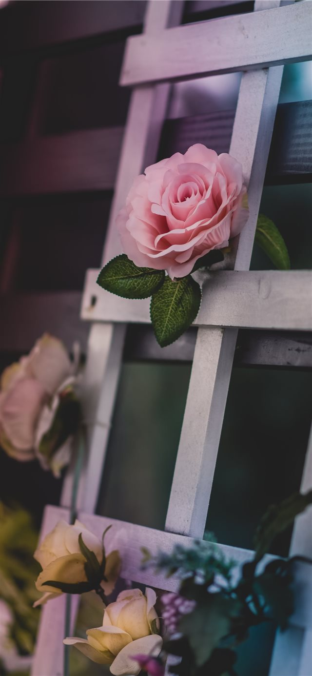 pink petaled flower iPhone X wallpaper