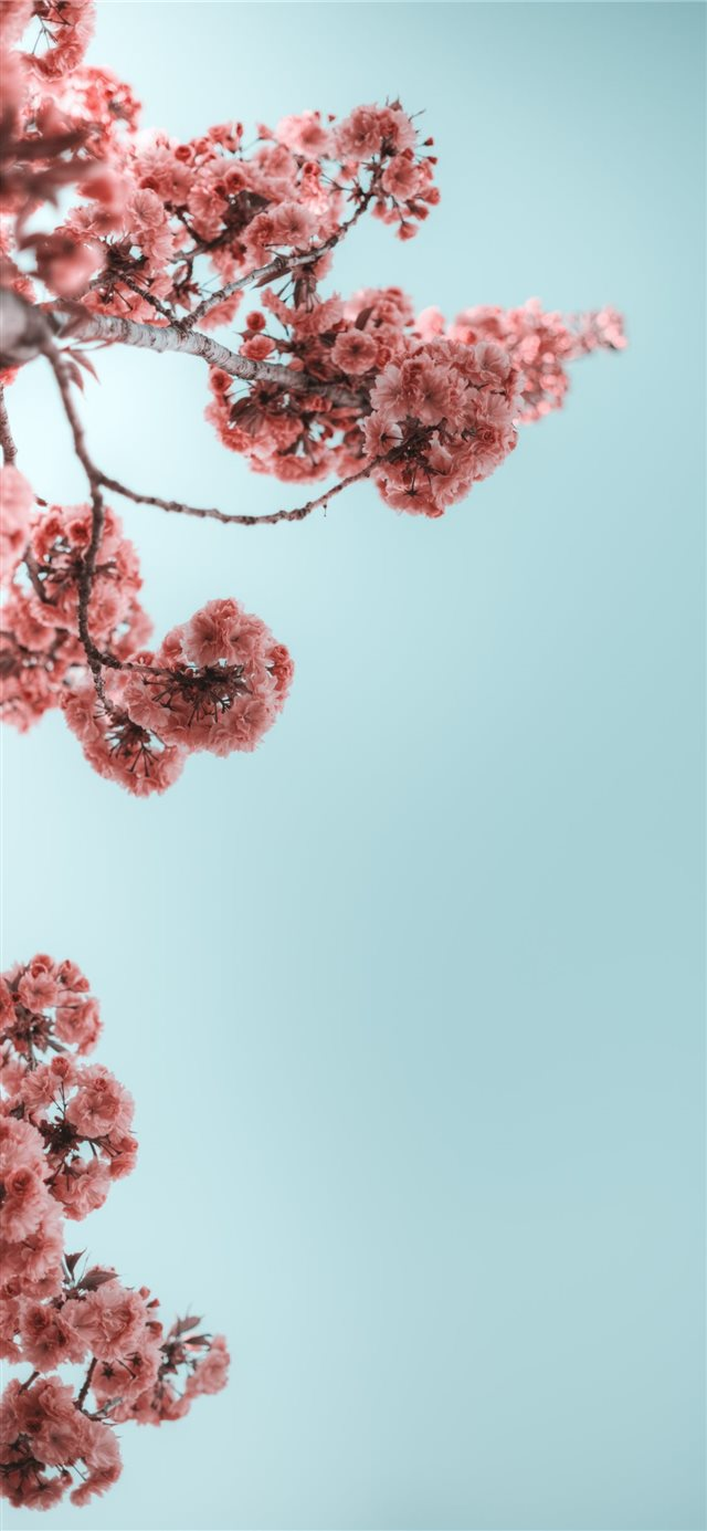 selective photograph of branches with flower iPhone 11 wallpaper