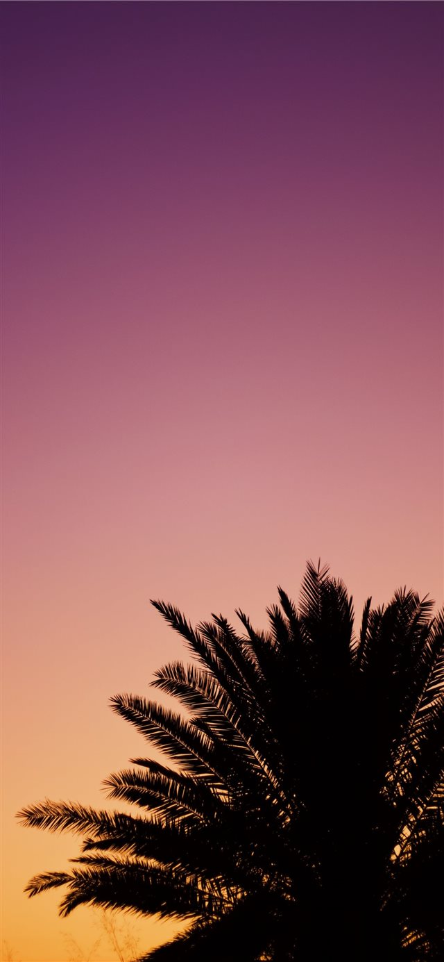 silhouette of palm tree iPhone 11 wallpaper