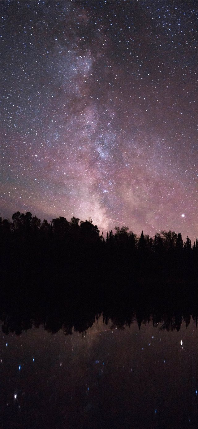silhouette of trees and night sky photo iPhone X wallpaper