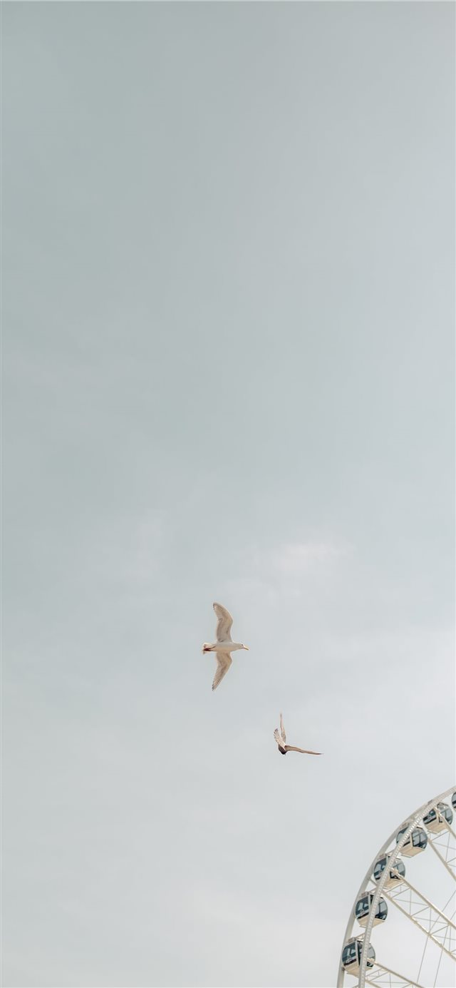 two birds on flight iPhone X wallpaper