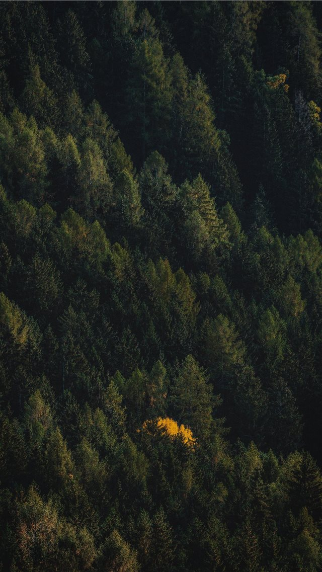 black and brown trees painting iPhone SE wallpaper