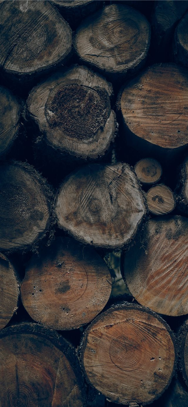 brown wood slice lot iPhone 11 wallpaper