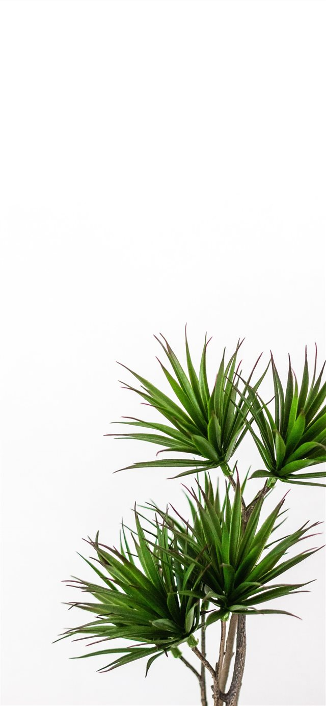 green palm plant iPhone X wallpaper