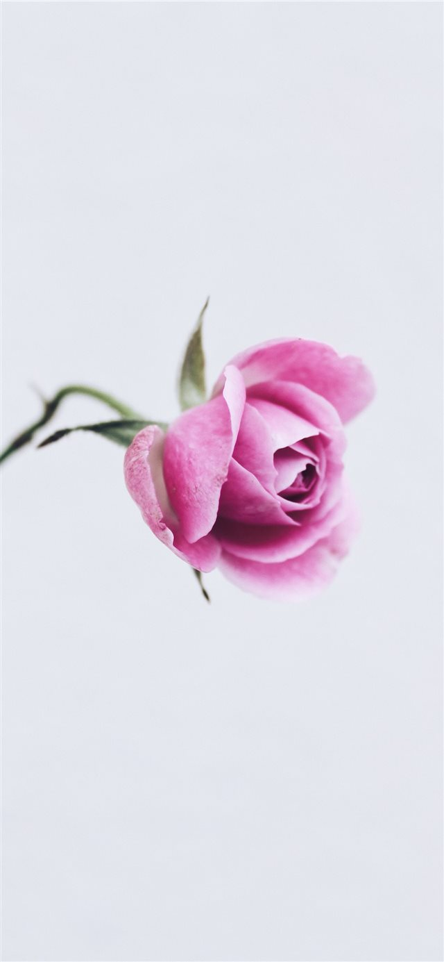 tenderness  iPhone 11 wallpaper