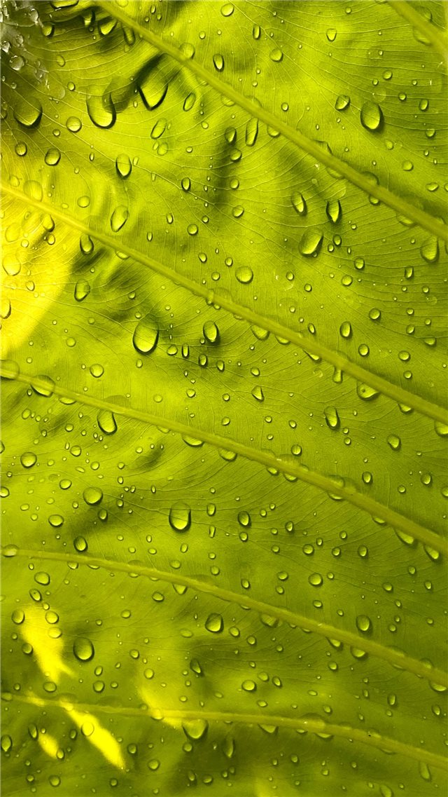 water drops on green leaf iPhone 8 wallpaper