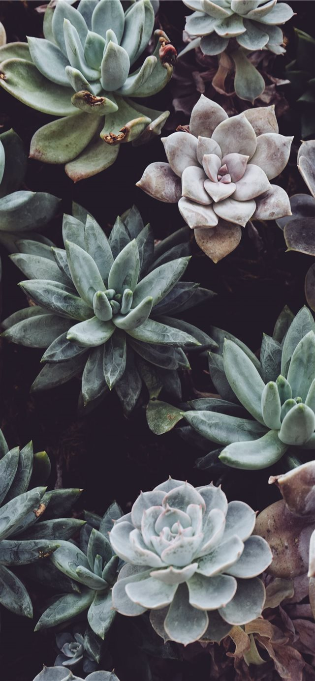 assorted color succulent plant lot iPhone X wallpaper